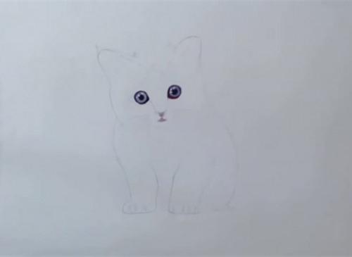 橘猫彩铅画步骤教程