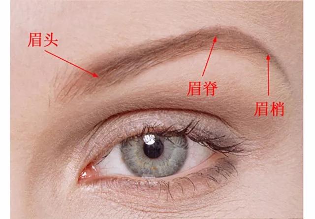五官教程之眼睛鼻子嘴巴合集耳朵介绍合集