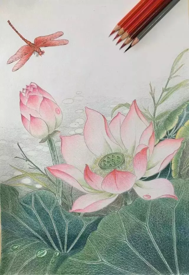 彩铅蜻蜓手绘图片